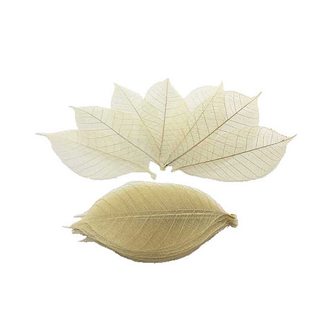 Natural Skelton Leaves - Toy Store and More