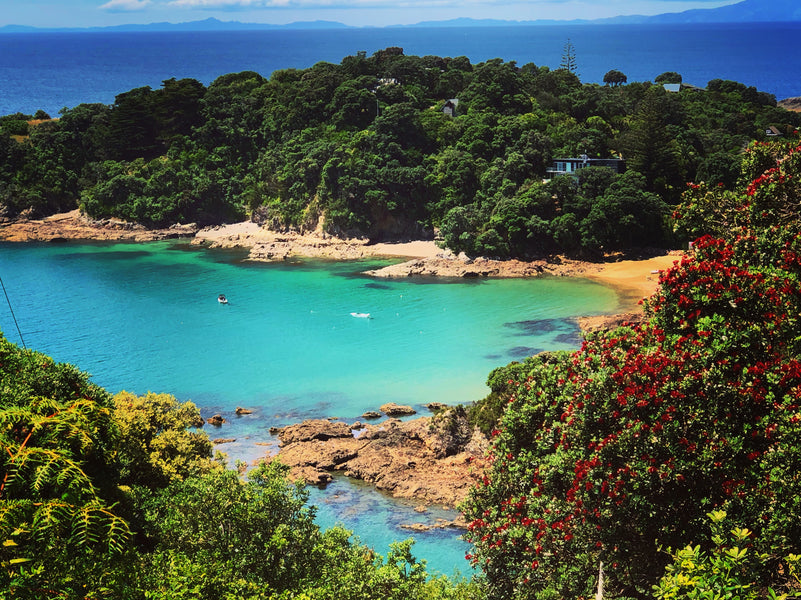 Waiheke Island is a 'must go' if you visit New Zealand.