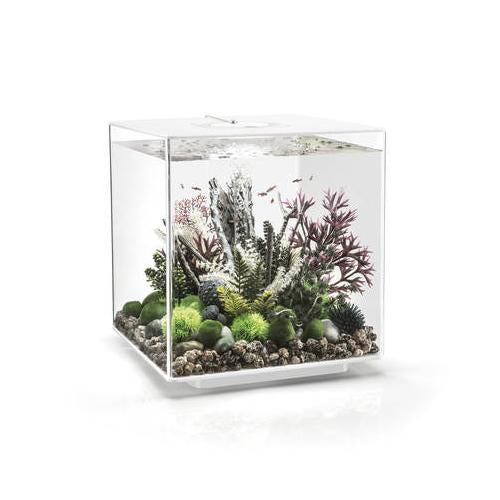 BIORB CUBE 30 LED WHITE