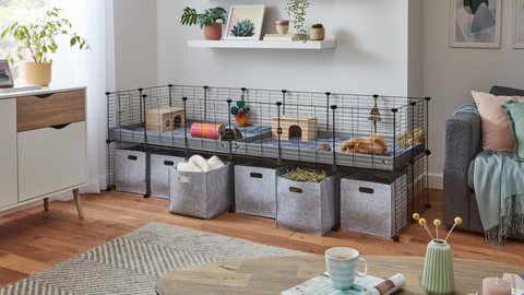 C&C cage for guinea pigs