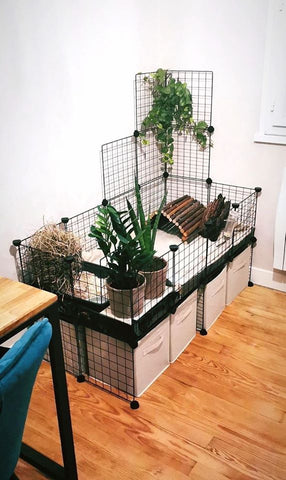 cage cavy decoree theme vert plante naturel kavee