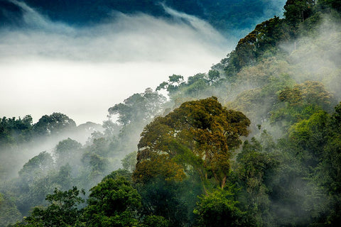 Nyungwe Forest - 6 Day Remarkable Rwanda Tour