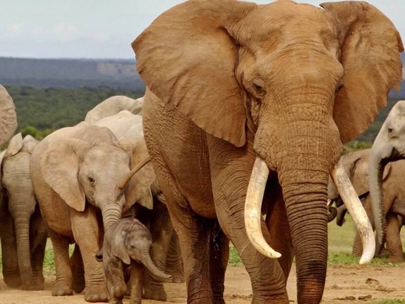 Addo Elephant Park - 7 Day Garden Route Tour
