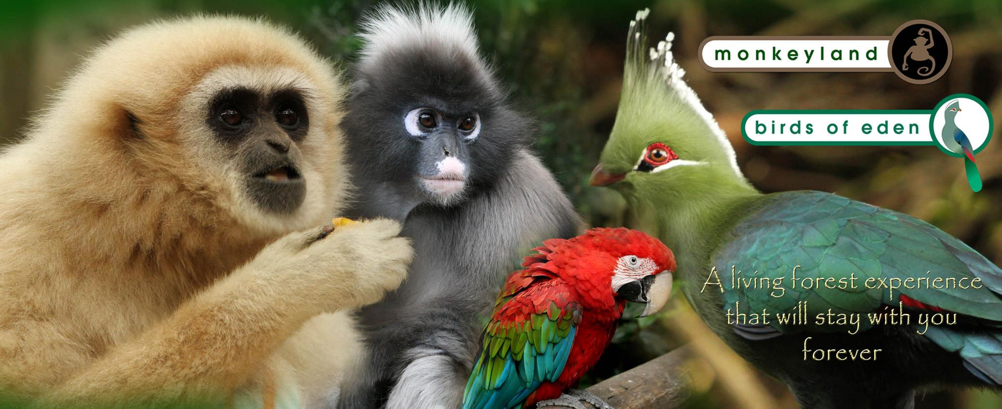 Monkeyland Birds of Eden - 7 Day Garden Route Tour