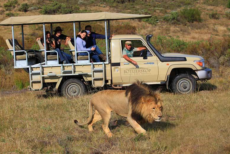 7 Day Garden Route Tour Game Drive