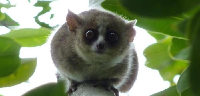 Bushbaby, Bushbaby Animal Sanctuary, things to do in SA, South Africa