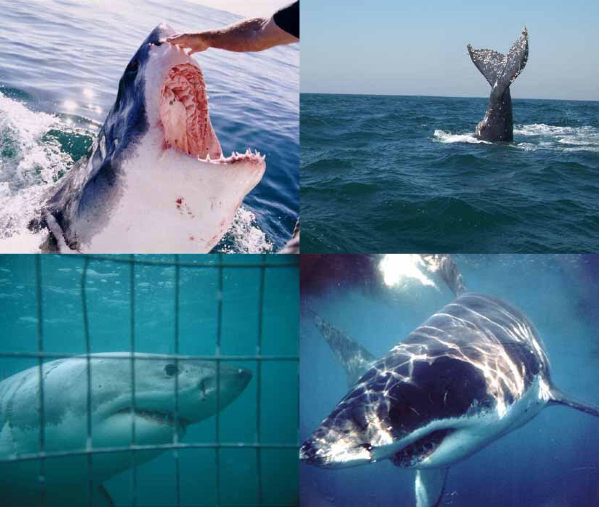 81b84ec487b569 Half-Day White Shark Diving in Mossel Bay (Western Cape