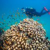 Mozambique and Kruger Diving Tour