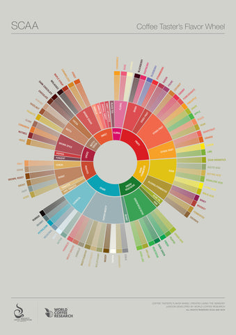 SCAA Coffee Taster's Flavour Wheel
