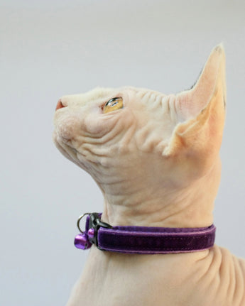 Dark Purple Violet Velvet Cat Collar