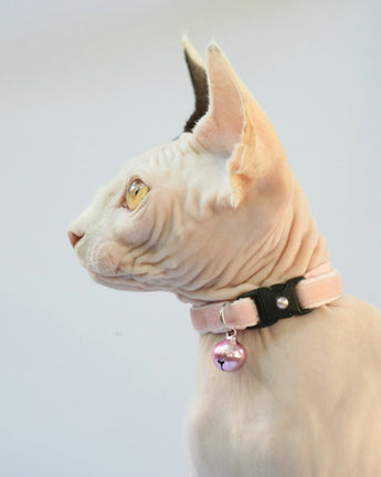 Cotton Candy Pink Velvet Cat Collar