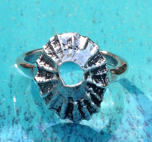 Limpet shell ring by Pa-pa jewelley