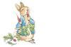 PETER RABBIT X NANCY & BETTY STUDIO