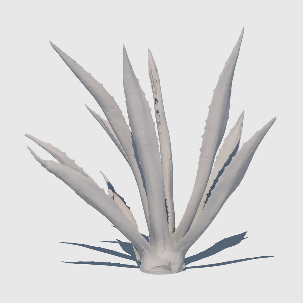 high resolution 3d render of an agave plant with clay applied