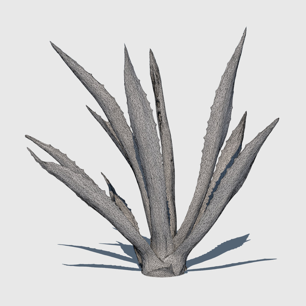 high resolution 3d render of an agave plant with wireframe applied
