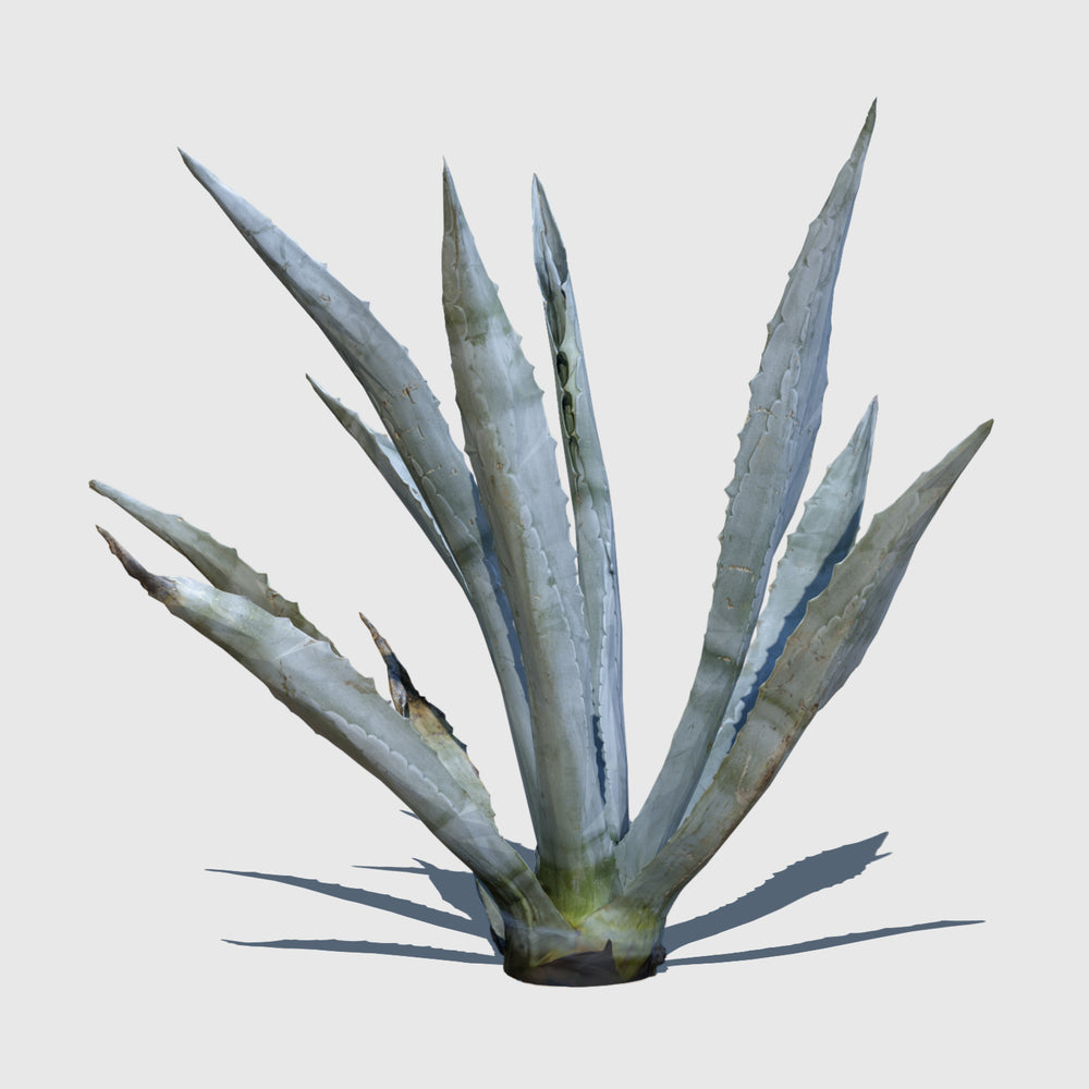 low resolution 3d render of an agave plant with texture applied