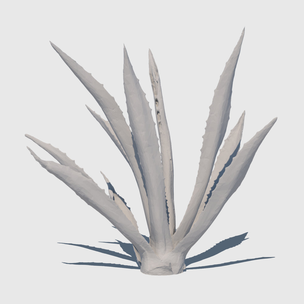 medium resolution 3d render of an agave plant with clay applied