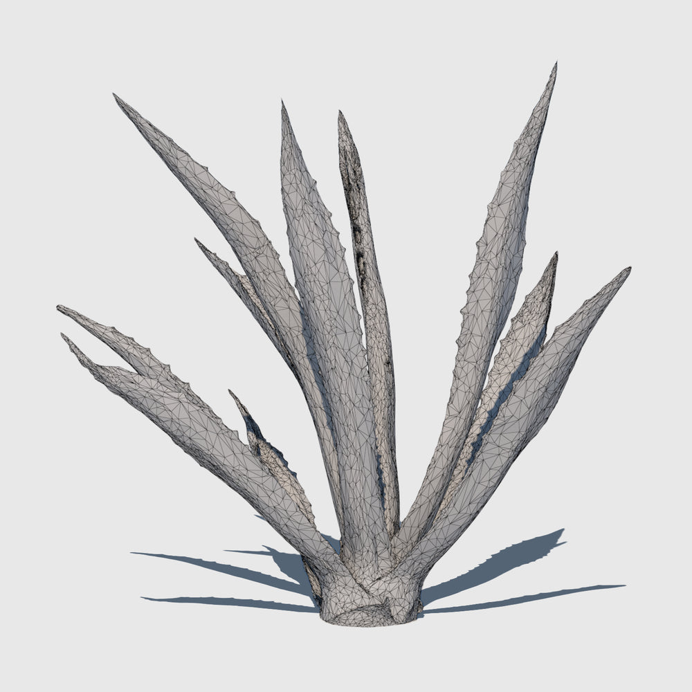 medium resolution 3d render of an agave plant with wireframe applied