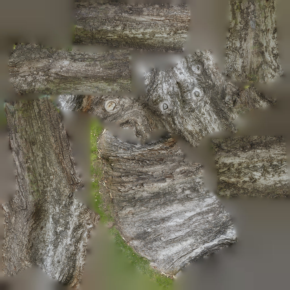 uv texture map in high resolution of a large leafless tree