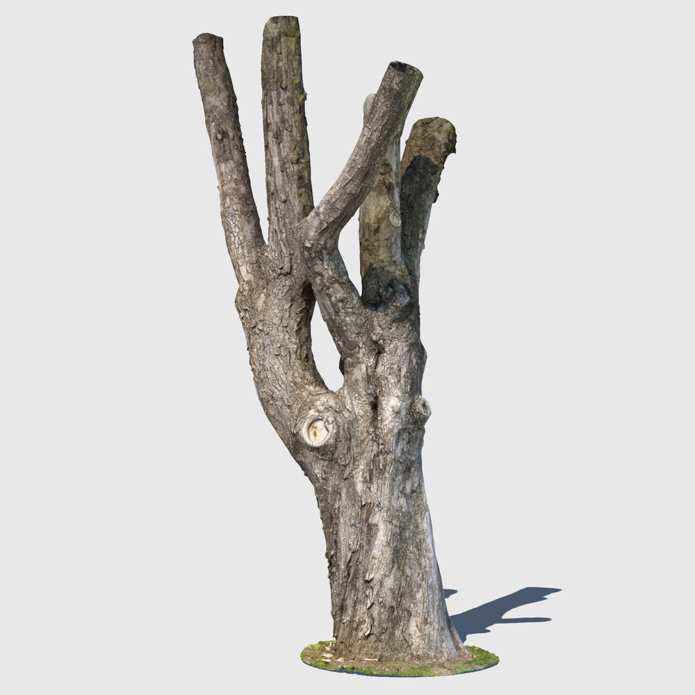 low resolution render of a textured model of a large leafless tree trunk