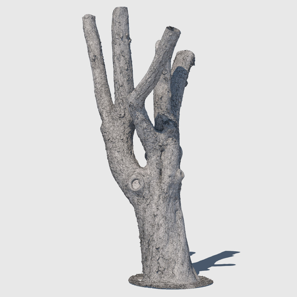 medium resolution render of a wireframe model of a large leafless tree trunk