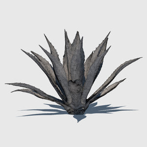 large cg Agave Americana plant rendered with high resolution wireframe