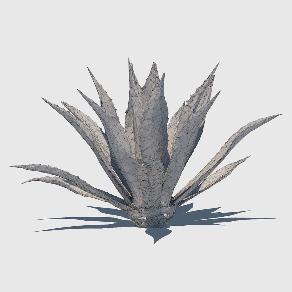 large cg Agave Americana plant rendered with low resolution clay