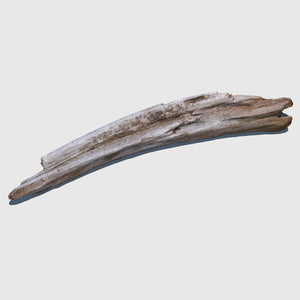 4-foot piece of cg beach driftwood with a slight bend on one side rendered in medium resolution texture