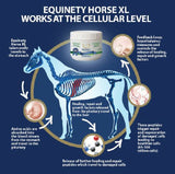 Equinety Horse XL Supplement