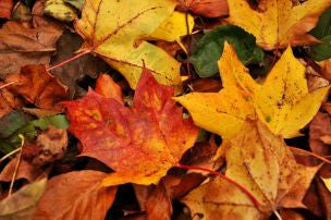 Autumn Spice Fragrance Oil