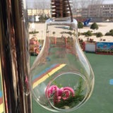 Light Bulb Shaped Hanging Terrarium