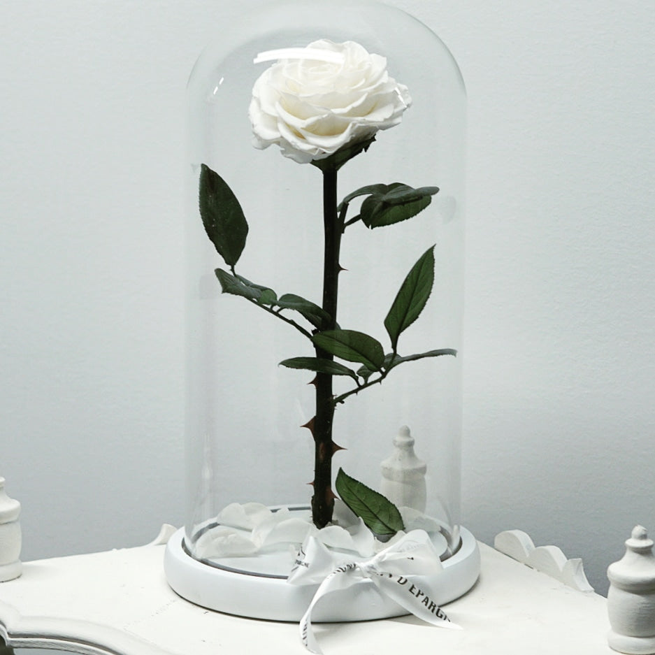 Limited Time Offer! - Eternity Rose in Enchanted Glass Dome