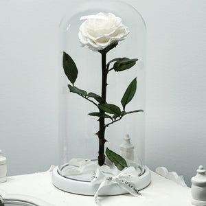 Eternity Rose in Enchanted Glass Dome
