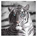 TIGER BLUE EYES STRIPES POLAR FLEECE THROW RUG BLANKET BEDROOM ~ MOTHERS DAY - the-bowerbirds-nest-of-treasures