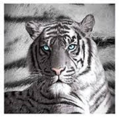TIGER BLUE EYES STRIPES Polar Fleece Throw Rug Blanket - the-bowerbirds-nest-of-treasures