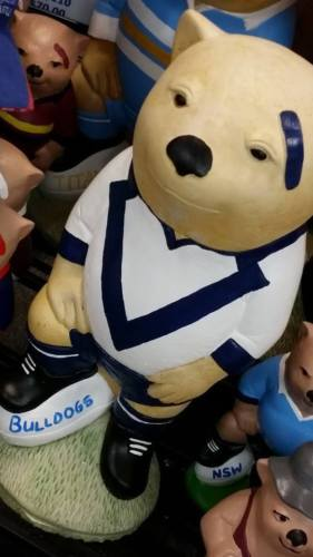 CANTERBURY BULLDOGS NRL Football Wombat Concrete Statue - The Bowerbirds Nest of Treasures