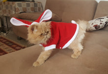 Cat in Red Bunny Outfit | Animal Clothing | Present Pal