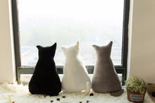 Cat from behind cushions at the window | Buy a Cat | Present Pal