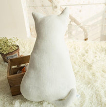 White Cat from Behind Cushion | Buy a cat | Present Pal