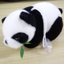 Cuddly Panda Teddy on desk | Present Pal