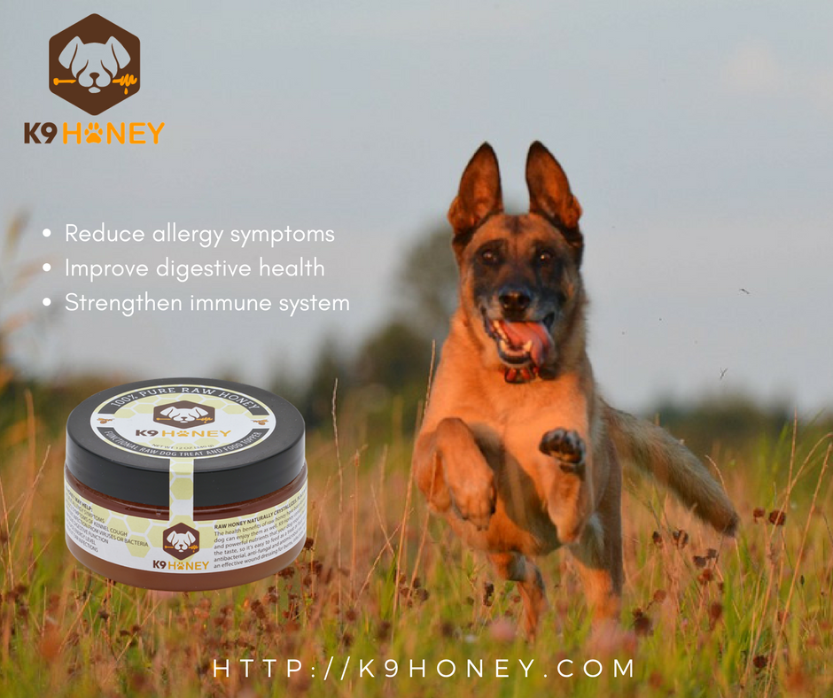 The Benefits of K9 Honey for Dogs