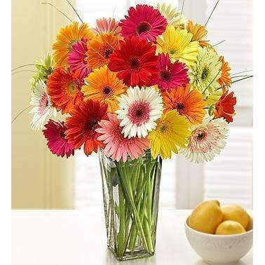 1-800-Flowers Two Dozen Gerbera Daisies With Clear Vase: Flowers- Shop MIXXCI