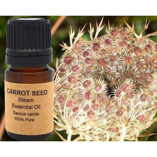 Carrot Seed Essential Oil 5 Ml, 10 Ml Or 15 Ml: Aromatherapy- Shop MIXXCI