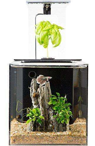 EcoQube Aquarium - Desktop Betta Fish Tank For Living Office And Home Décor: Aquariums & Fish Bowls- Shop MIXXCI