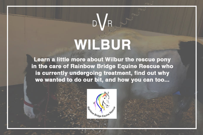 Meet Wilbur and learn how you can treat yourself and this rescue at the same time...