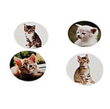 CAT PARTY Photo Realistic Cats & Kitten Stickers Favours Pack of 50 Free Postage