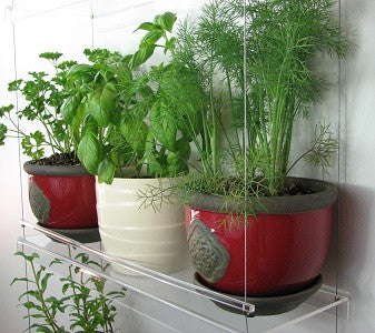 Window plant shelves - Large containers of herbs!