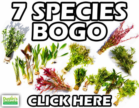 7 Species of Plant Buy ONE GET ONE FREE