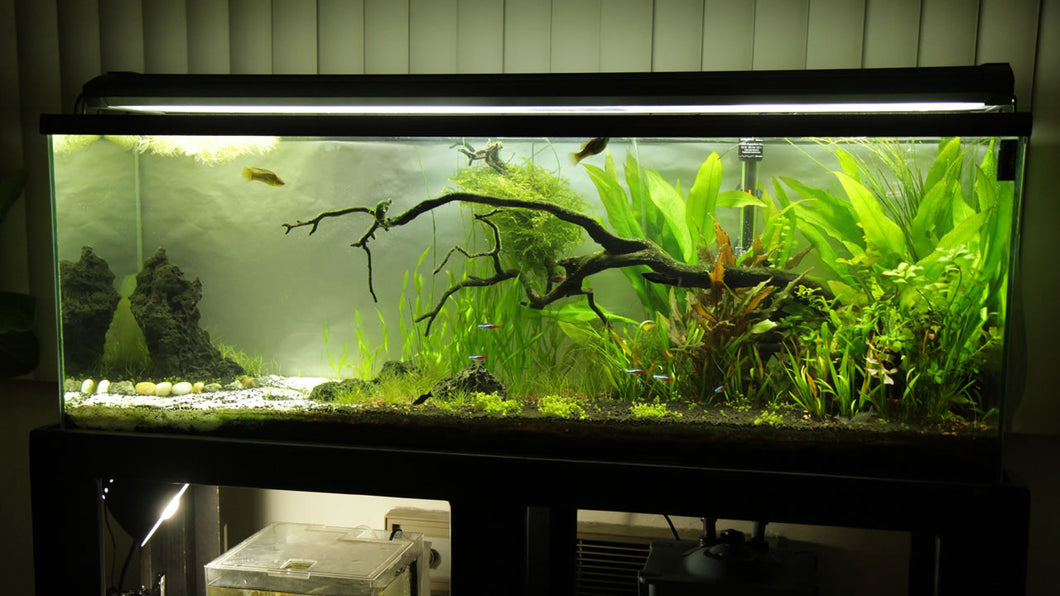 Done for you 55 gallon just add water complete aquarium for 55 gal fish tank