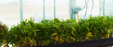 This is HALF of a 125 Gallon in natural daylight which is how we grow ALL of our Aquarium Plants.